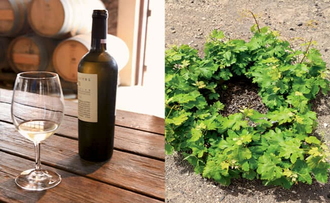 best santorini winery tour