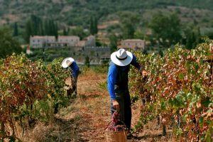 Peloponnese vineyard - Best Greece Food & Wine Tours