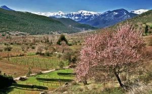 Peloponnese landscape - Best Greece Food & Wine Tours